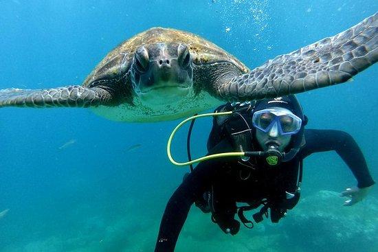 Plongée sous-marine pour débutants à...