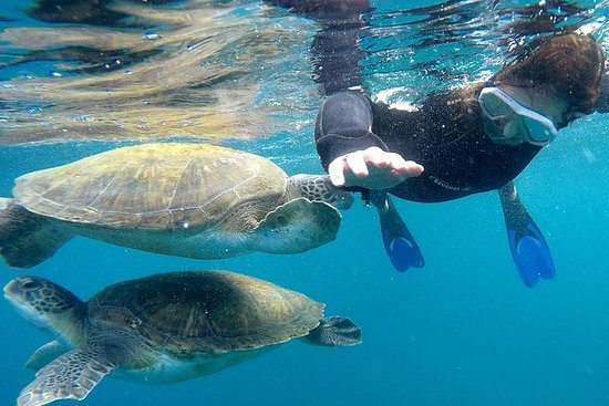 Esnórquel con tortugas marinas (barco...