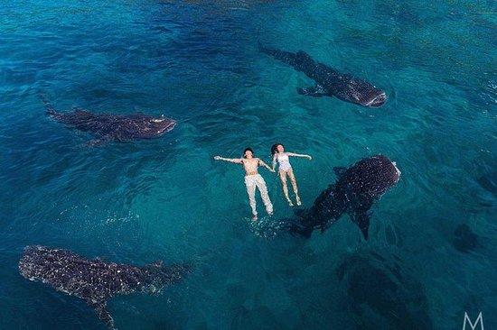 Whale Shark Watching og Sumilon...