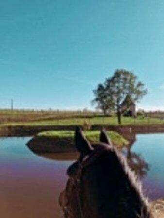 Eynesse, France : La vigne, les chevaux, la nature!  Au Château Picon, on vous propose d'amener votre cheval en vacances : un box avec paddock est à votre disposition, la carrière, le cercle de longe, le moniteur... alors pourquoi pas continuer de vivre votre passion, même pendant les vacances?!  Contactez nous aujourd'hui pour plus d'informations : guillaume@chateaupicon.fr