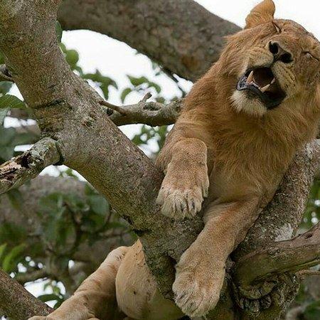 Queen Elizabeth National Park, Uganda: Wildlife is so interesting #big five #uganda #rwanda#national parks with viapoafrican Safaris. WhatsApp us at;+256780660625