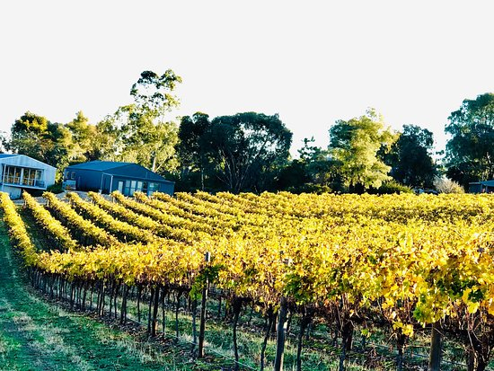 Serengale Vineyard