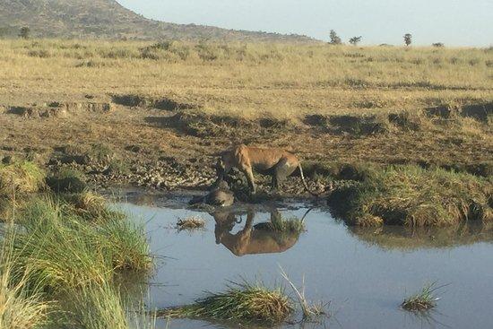 XP East Africa Safaris