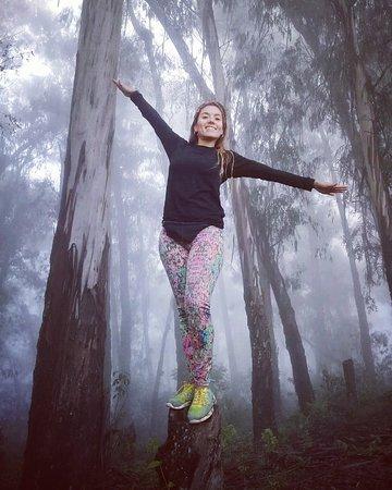 """Province of Tucuman, Αργεντινή: Día de neblina en """"El Parque de la memoria"""". Tucumán, Argentina #parquedelamemoria #neblina #bosque"""