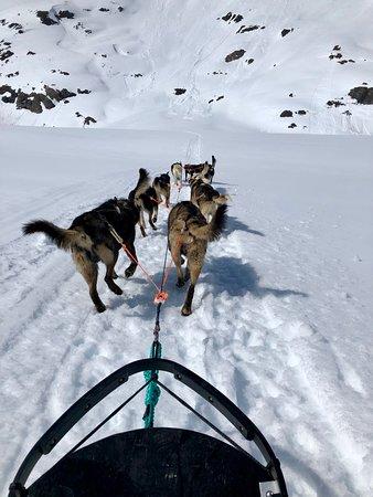 Dog sledding at Colony glacier