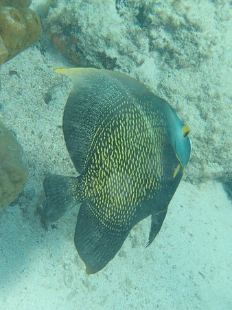 Catamaran Cruise in Aruba with Snorkeling Experience and Lunch: Saw this beautiful fish.