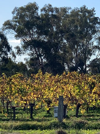 VIP Swan Valley Wine Tour: Premium Small-Group Wine and Gourmet Experience: Trellised grape vines