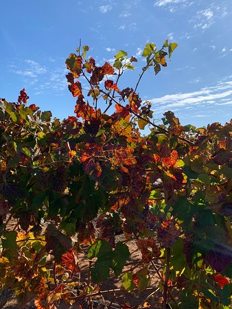 VIP Swan Valley Wine Tour: Premium Small-Group Wine and Gourmet Experience: Autumn colors in the vineyard