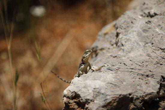 Turkish wildlife
