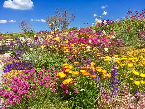 Sandown Castle Community Garden