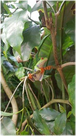 Costa Rica: Exquisite flowers.