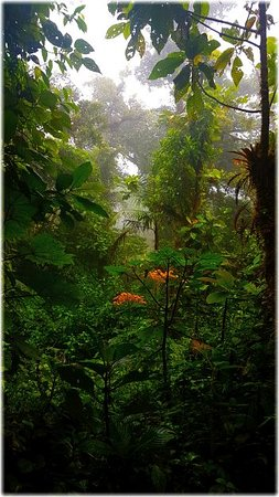 Costa Rica: Marvelous forest.