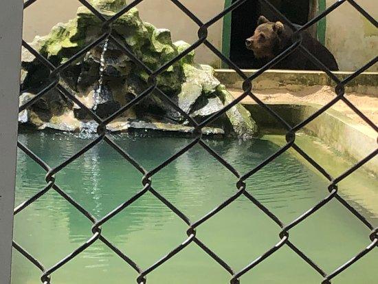 Valokuva: Parque Estadual de Dois Irmaos - Zoologico de Recife