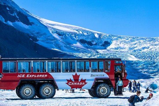 Il tour Columbia Icefield include la