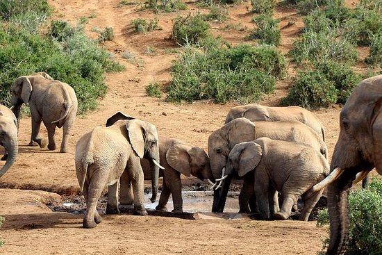 Addo Elephant National Park Safari de...