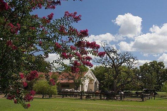 Besøk landsbyen San Antonio de Areco...