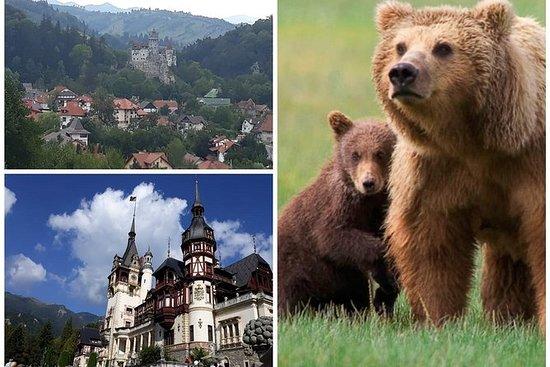 2 Days Private Transylvania Tour:Peles& Dracula's Castle, Prejmer&Bear Sanctuary
