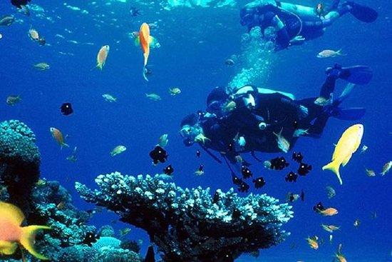 Dykking i Galle: Privat tur fra...