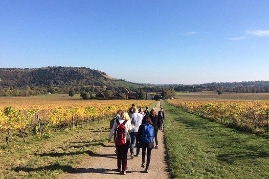English Vineyards Walking Tour from...
