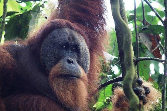 13 DAYS Explore Sumatra MEDAN BUKIT...