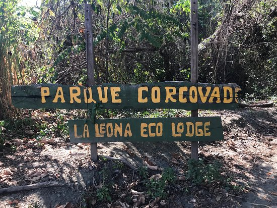 Osa Birders Tours: Hot day hiking into Parque Corcovado. The trail weaves in and out of tree cover and beach-- so beautiful. Lucky to see lots of birds, mammals and reptiles.