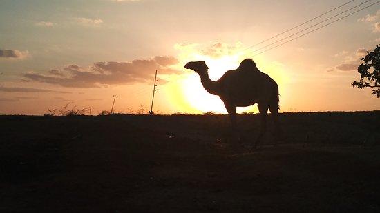 Garissa, كينيا: I'm going home. Have a nice evening!