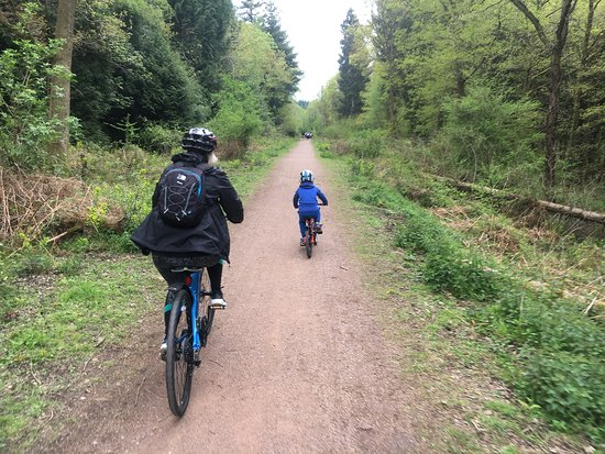 Forest of Dean, UK: On the trail