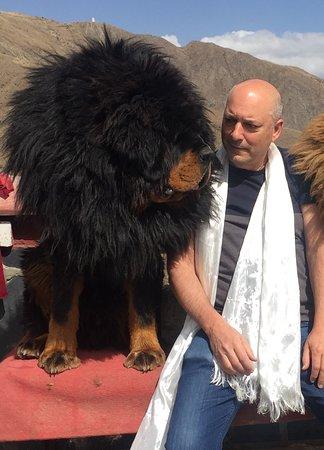 Interacting with a Tibetan Matiff dog