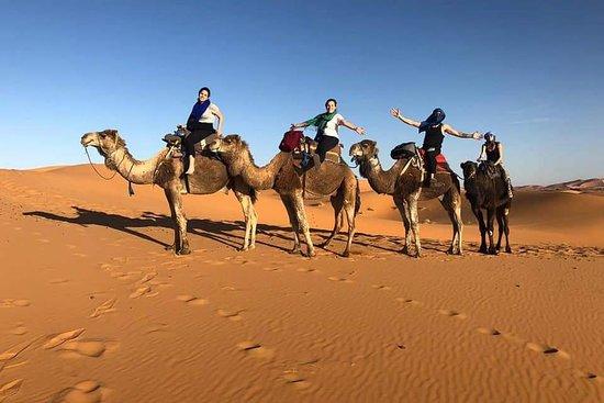 Excursiones por el desierto