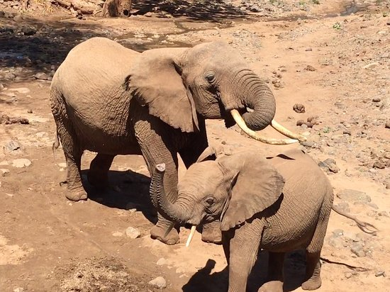 Shoveller Safari Experience