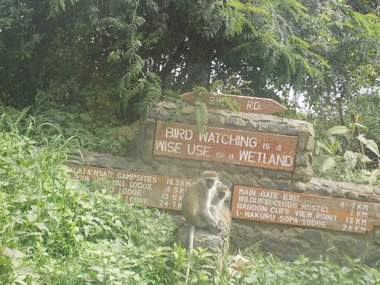 Lake Nakuru National Park 사진