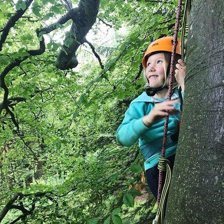 Wild Tree Adventures