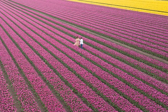 Tulip Tours Holland