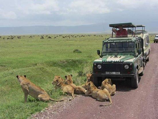 Ngorongoro Crater Tanzania home Of lions pride