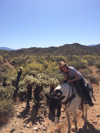 Saguaro Lake Ranch Stable 사진