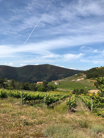Provesende, Portugalia: Vineyards