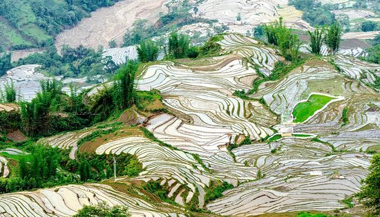 Photography trip in Y Ty in May rice terraced season farming www.tourguidevietnam.com Tony private tour guide vietnam