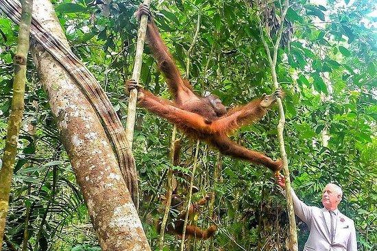 Maravillosa criatura orangután...
