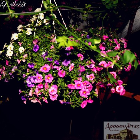 Drosoulites Rakadiko: flowers