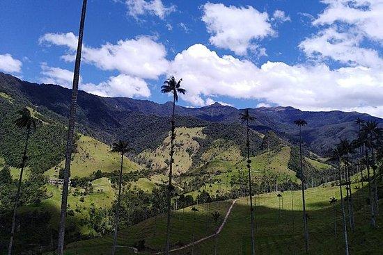 Salento Valle del Cocora og Filandia