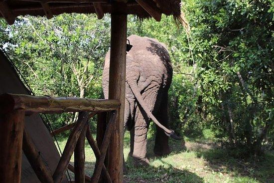 10-dagers Western Uganda Wildlife...
