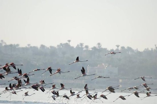 Fayoum全日游观鸟