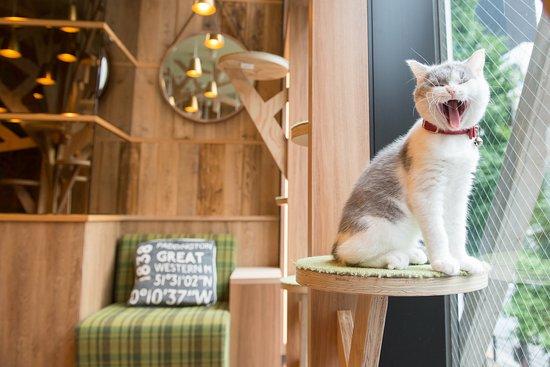 Cat Cafe Mocha Akihabara