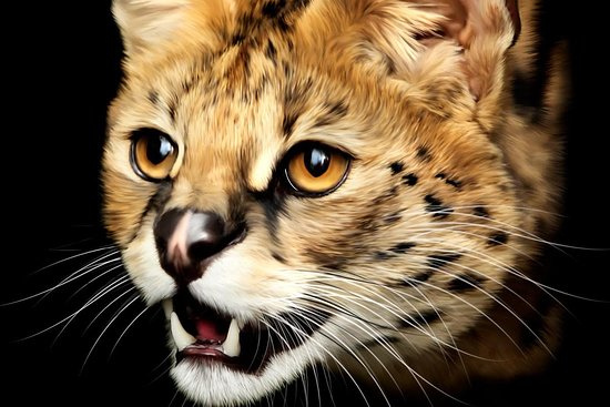 Serval Cat Tours and Safaris Ltd