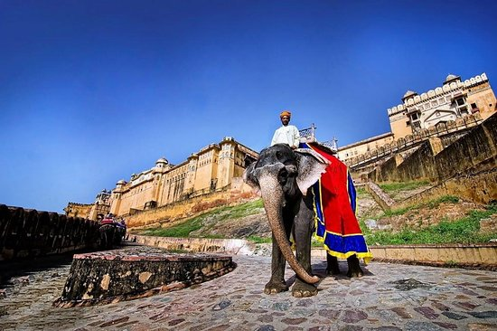 Insider India Tours