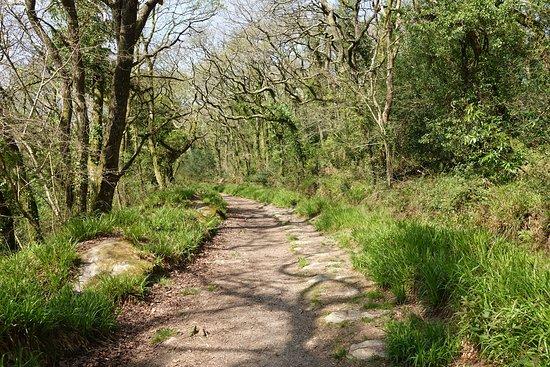 Luxulyan Valley to Prideaux Circular Walk
