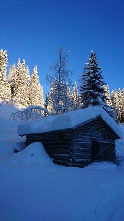Follinge, สวีเดน: In our woodstove sauna you can relax after a fantastic dogsledding tour