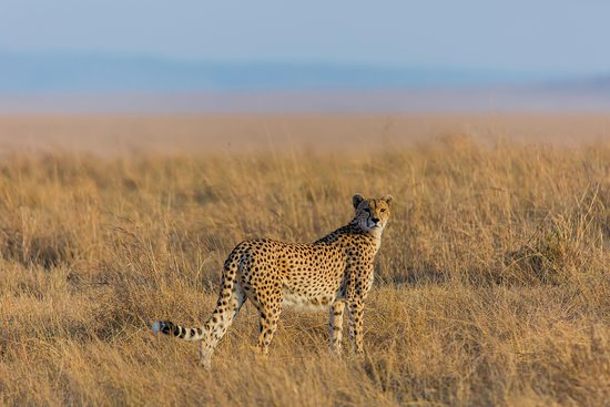 NimTree Wildlife Safaris