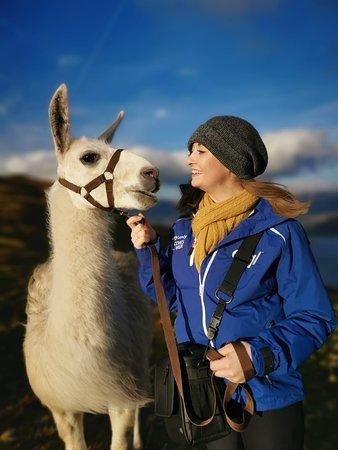 Llama trekking at Once Upon A Llama