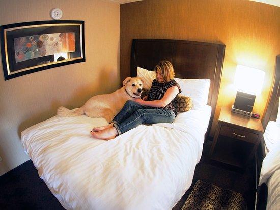 Evergreen Resort: Pet-Friendly Rooms